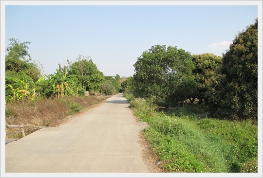739sqw nongtong langanOrchard,chiangmai land for sale